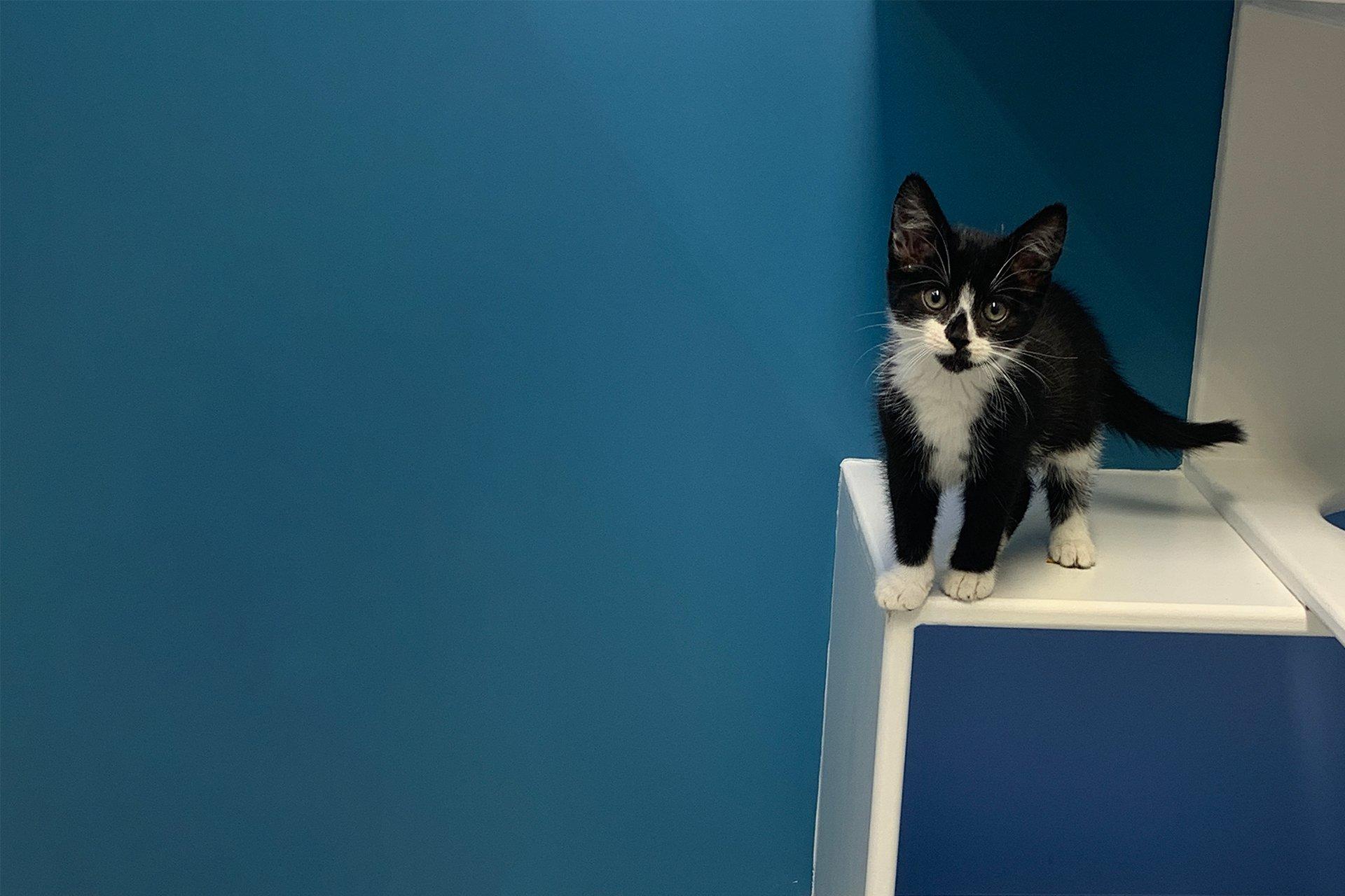 Kitten at WMCC